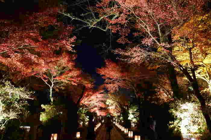 石山寺では、毎年紅葉シーズンになると、夜間のライトアップが行われます。漆黒の世闇を背景に、各お堂、モミジが浮かび上がり、日中とは異なる幻想的な風景を楽しむことができます。