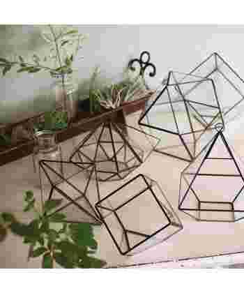 アイアンのジオメトリックな立体フレームが印象的なガラステラリウムケース。サボテンや多肉植物を入れて、お部屋にグリーンの小宇宙が作れます。