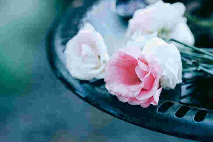 幾重にも花びらが重なっていて、なんだかドレスのスカートのよう*。その華やかさで、結婚式でも人気なのがリンドウ科の「トルコギキョウ(トルコキキョウ/英名:リシアンサス)」です。花言葉は「希望」。贈り物としてもぴったり。