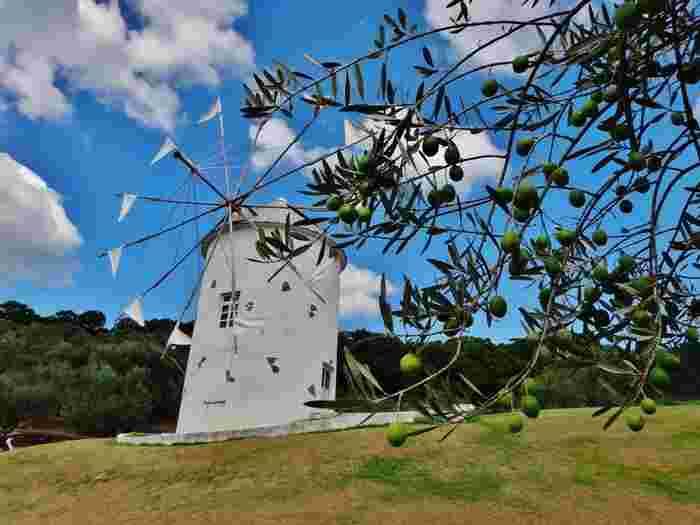 小豆島のシンボルともなっているのが、この白いギリシャ風車。姉妹島提携を結んでいるギリシャのミロス島から贈られたものです。
