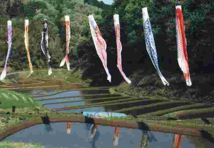 毎年春になると、鯉のぼりがはためく国見の棚田は、約50枚の水田が敷かれている棚田です。規模としては小さいものの、周囲ののどかな里山風景は、日本人の心に染み入る魅力を持っています。