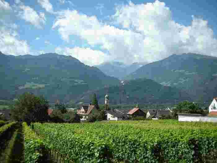 マイエンフェルト郊外では、ブドウ畑が広がっており、素朴でありながらも美しい景色が広がっています。