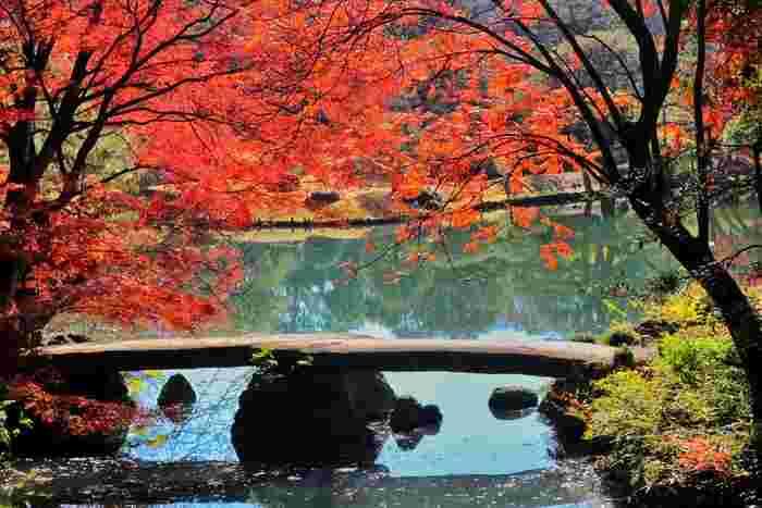 江戸の二大庭園のひとつである六義園。モミジやハゼなどの木が、周囲との調和を計算して美しく植えられています。日本らしい美意識が感じられる庭園をゆっくり散策すれば、きっと心が洗われるはず。