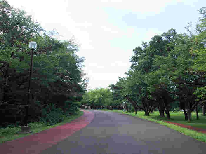 和光市駅から少し離れたところには、緑豊かな和光樹林公園があります。この一帯はキャンプ朝霞基地跡地の一部を利用して作られた公園で、ジョギングコースやBBQエリアなどを併設。程よい自然が近くにある、心安らぐ町です。