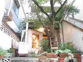 京都大学北側の御蔭通は閑静な住宅街。太陽カフェは、御蔭通が白川通りに交わる交差点の手前にあります。景色に馴染んで見落としてしまいそうですが、少し奥まった玄関を覗くと、ナチュラルな雰囲気の可愛いお庭が。