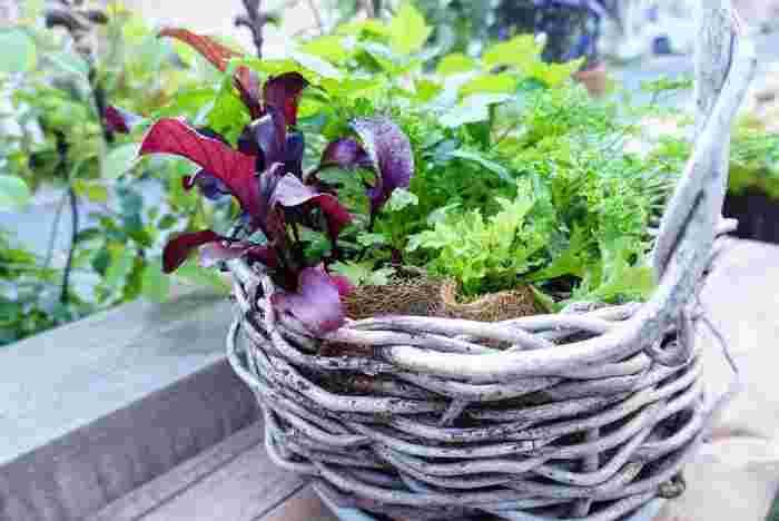 ブロンズカラーの葉っぱで彩りを添えたり、ぎざぎざの形の葉っぱでメリハリを出したりしてみましょう♪ハーブ類を合わせるのもおススメです。