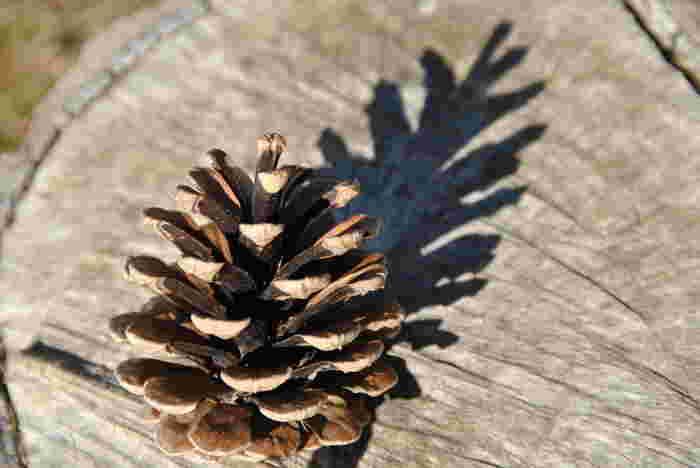 松ぼっくり一つで簡単に作ることのできるミニツリーは、お子様と一緒に作るのもおすすめ。何もしない状態でも、すでにクリスマスツリーに見えますね♪