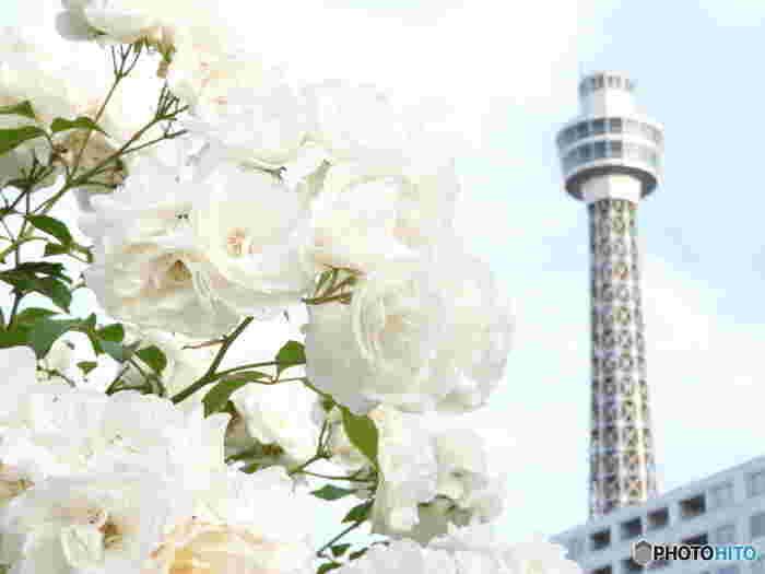 マリンタワーや山下公園、港が見えるホテルや中華街などなど魅力的なスポットがたくさん詰まった「横浜」。