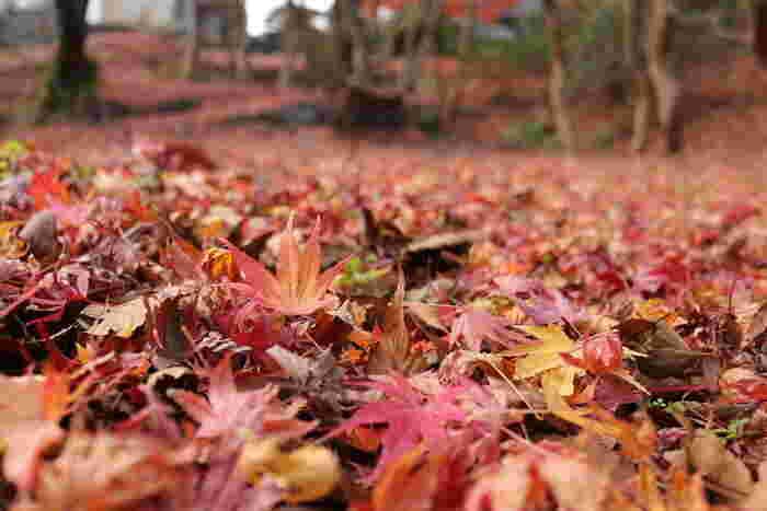 秋は、しっとりと美しい季節。その秋らしさを象徴する枯れ葉を、アートとして存分に楽しんでみてはいかが?日々の暮らしが、豊かに色づき始めるのではないでしょうか。
