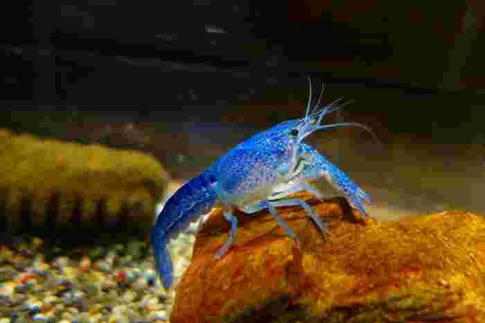 昭和31年に開館した「竹島水族館」は日本でも1,2を争う年代物の水族館で日本で4番目に小さな水族館です。三河湾、遠州灘の生物を中心に熱帯地方の淡水魚、深海の生物など500種4,500点を飼育。規模の小ささを逆手に取ったくすりと笑えるユニークな解説文や手描きのポップなどアットホームで斬新な展示方法が話題となり、全国的に人気を集めています。
