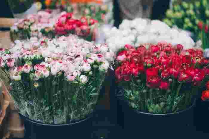 花言葉の意味合いから母の日におすすめなのは赤・ピンク・青・紫です。赤は赤でも深い赤色は意味がまた異なり、黄色やオレンジもあまり母の日には適していないといえます。花言葉を気にするならチェックしておいてくださいね。