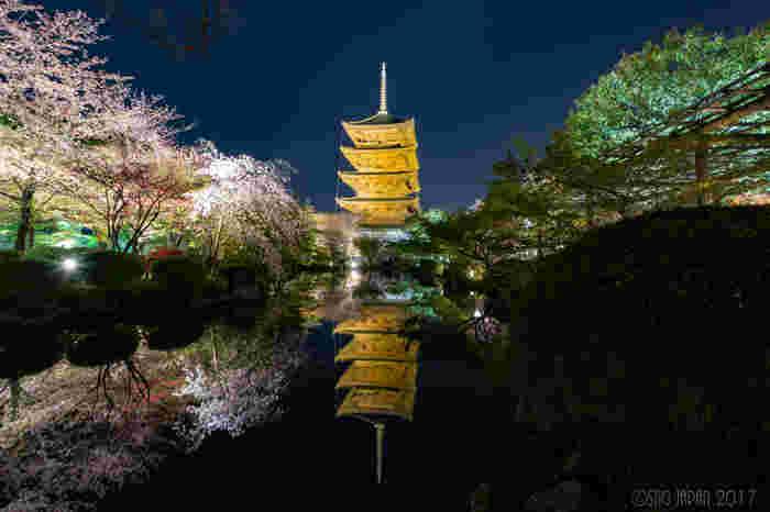 国宝に指定され、桜の名所としても知られる「東寺」にも多くの観光客が訪れます。 中でもしだれ桜の大木「不二桜」は圧巻です。またそれを囲むように、ソメイヨシノも咲き乱れ、五重塔と一緒に水面に映り込む姿は何とも言えない美しさです。大人気の夜桜ライトアップは荘厳で風光明媚。一度は見て頂きたいおすすめお花見スポットです。