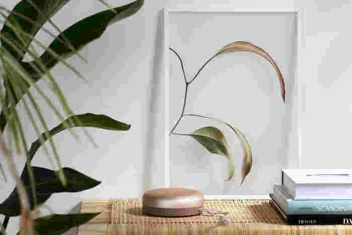 イラストや写真などを扱っている、デンマークのブランド「Paper Collective(ペーパーコレクティブ)」のポスターは、材質が紙ではないことが最大の特徴。クリアフィルムに植物がUVプリントされているのですが、透明なフレームに植物が閉じ込められているような、ユニークでおしゃれな雰囲気が漂います。