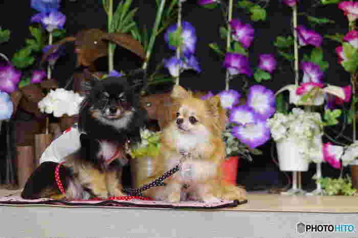 ドッグカフェとは、愛犬と一緒に立ち寄れるカフェのこと。店内入場OKのお店や、テラス席のみのお店、わんちゃん用のご飯があるところなどいろいろあります。