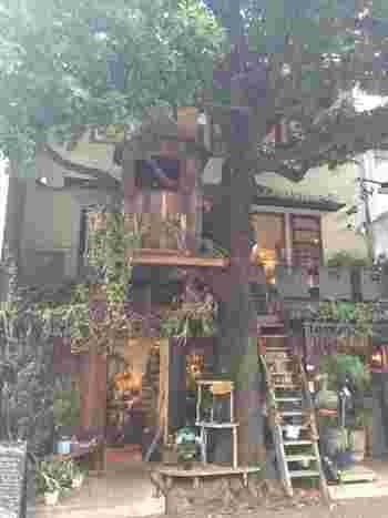 """「Les Grands Arbes」(東京都港区)・・・お店の名前「Les Grands Arbes(レ・グラン・ザルブル)」とは、フランス語で""""大きな樹""""という意味。庭には可愛いツリーハウスがあり、店名通りの大きな樹のシンボルツリーが目を引きます。「Fleur Universelle(フルール・ユニヴェセール)」の階上にありますよ!店内もツリーハウスになっていて、樹の優しさと強さ、しなやかさに心が和み優しい時間が共有できます。奥にある古民家をリノベーションしたオシャレな店舗で、お食事をするのもオススメです!"""