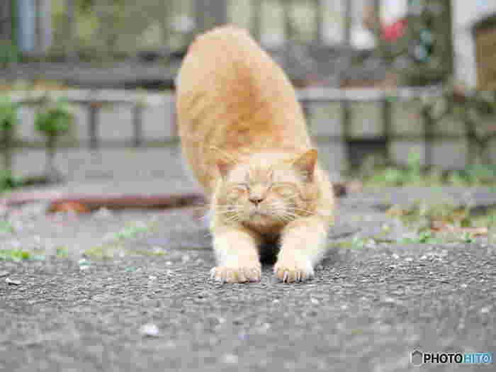 あらかわ遊園周辺には地域猫が多く、園内でも出会える事があります。