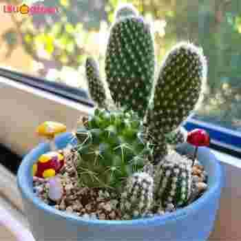 サボテンの寄せ植えは、鉢にこだわったり、飾りを添えるのもおしゃれ。また、ゼオライトで作ったカラーサンドを透明な容器に入れると、ひと味違う素敵な寄せ植えになります。