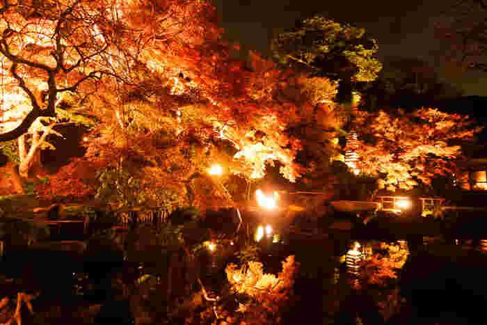 池に映し出される紅葉は、思わずため息がもれるほどの美しさ。長谷寺の紅葉シーズンも11月末から12月頭頃ですので、夜は冷え込むため上着など羽織るものを忘れないようにしてくださいね。