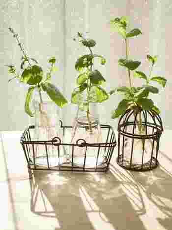簡単手作り水耕栽培にチャレンジ!家庭菜園をもっと身近に