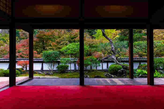 境内に3000本を超えるカエデが色付く正暦寺は、古くから「錦の里」とも呼ばれるほどの紅葉の名所です。特に、福寿院からの眺めは絶景の一言。静謐な空気の中で、特別なひとときを過ごすことができます。