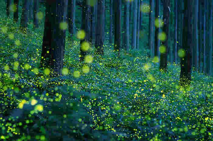 まるで暗い森の中に宝石を散りばめたかのよう。ファンタジックな絶景にうっとりです。
