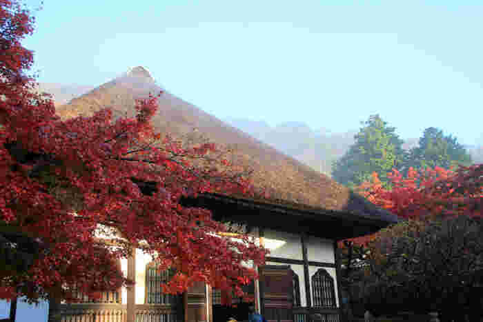 修行僧の坐禅道場である「選仏場」。茅葺き屋根に鮮やかな紅葉の赤が映えます。