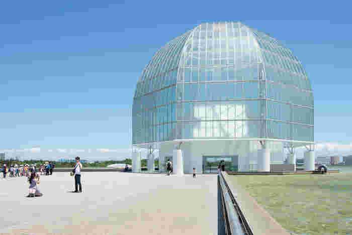 葛西臨海公園というと水族館のイメージがありますが、実はお花の名所でもあるんです。屋内の水族館に行くついでに、ぜひ冬のお花を探してみませんか?