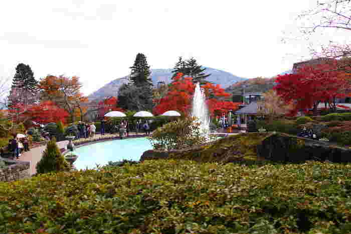 大正3年(1914年)に開園された「強羅公園」は、日本初のフランス式整型庭園です。正門と西門で約37mある標高差が生み出す開放的な園内には、熱帯植物館や茶室、カフェ、体験工房などがあり、1日中楽しめます。