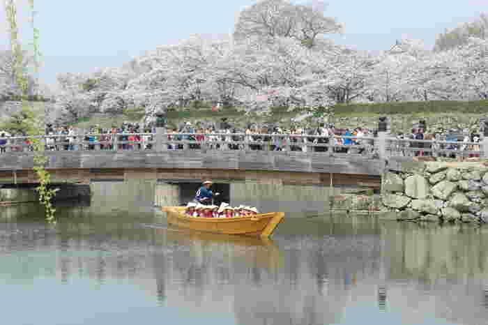 江戸時代初期の天守閣や櫓などが現存している姫路城は、国宝、重要文化財に指定されているほか、世界遺産にも登録されています。また、「日本100名城」の一つに選定されており、洗練された優美さを持つ姫路城には、約1000本の桜が植栽されています。