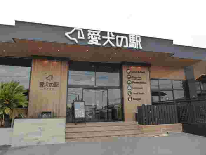 国道135号線沿いの城ケ崎入口交差点のすぐそばにあるのが「愛犬の駅」です。屋内外のドッグランやドッグカフェ、陶芸体験、ワンコグッズなど、愛犬同伴の飼い主さん向けに作られた施設です。