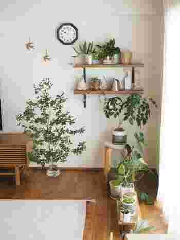 インテリアグリーンは、大小「サイズ違い」で集めると奥行きのある素敵なインテリアに。大きな鉢植えを主役に、小さな鉢植えを散りばめていくとバランスよくまとまりますよ。