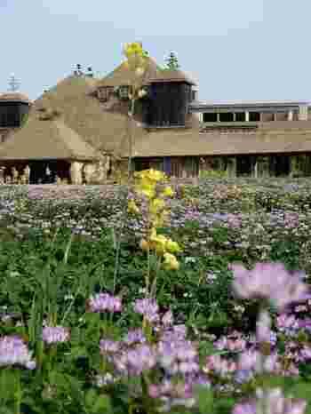 歴史文化と自然がバランスよく存在する滋賀。大きな琵琶湖の周りには素敵なスポットがたくさんあります。古都・京都も素敵ですが、次のお出かけには、少し足を延ばして湖都・滋賀を訪れてみませんか?