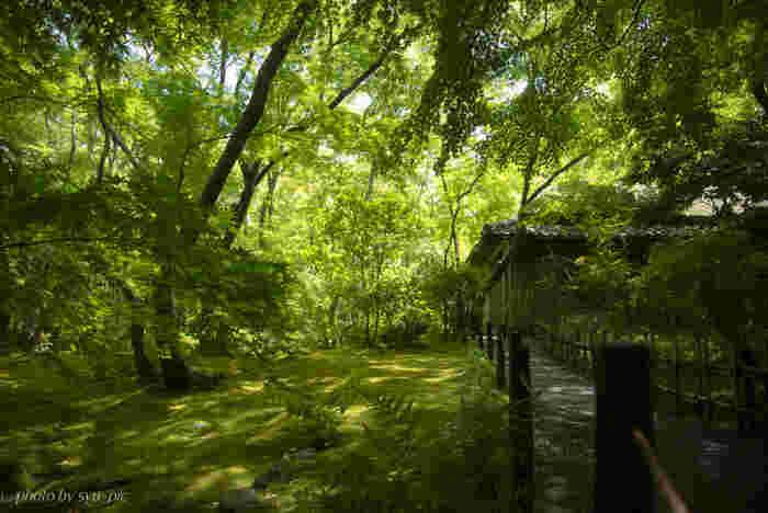 静かな佇まいをした境内には、モミジ、カエデなどの落葉樹の樹々が数多く植樹されており、初夏から盛夏にかけて豊かな緑一色となります。祇王寺の敷地内は寺院境内でありながら、豊かな森のような雰囲気を醸し出しています。