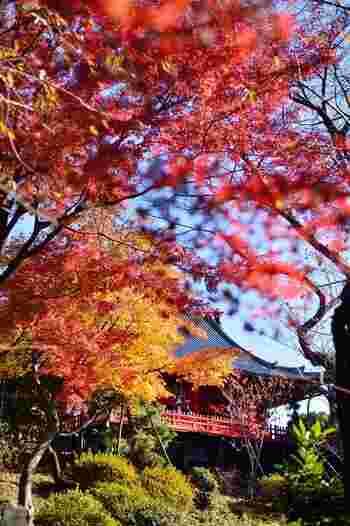 それは、「上野公園」の北西部から南部にかけての地域(以下「ウエストサイドエリア」と表記)です。  【上野公園のウエストサイドエリア内に建つ「清水観音堂」は、隠れた紅葉の名所。(12月初旬撮影)】