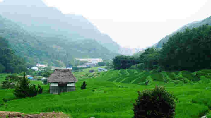 松崎町を代表する景勝地の一つ、石部の棚田は標高120~250メートルに位置している約370枚、42000平方メートルに及ぶ広大な棚田です。