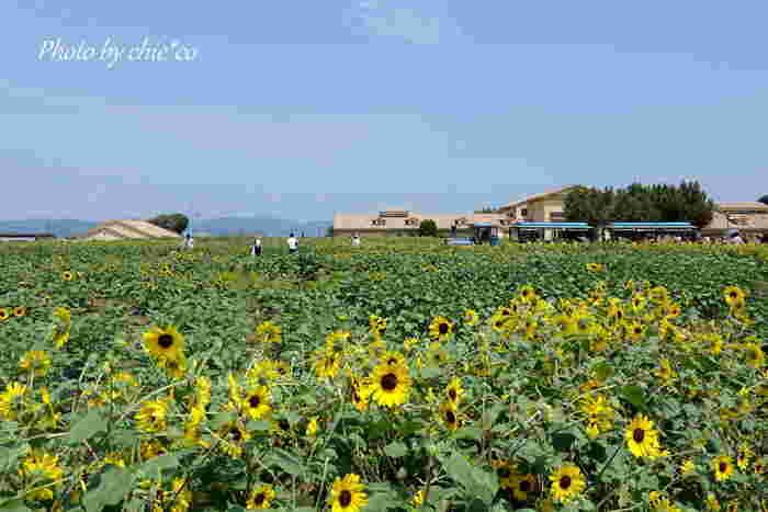 「長井海の手公園・ソレイユの丘」は、三浦半島の高台にあります。広大な敷地には、四季折々の花が咲き誇り開放感抜群です。レンタルサイクルも申し込めるので、ここをスタート地点にするのも良いですね。ロードバイクやマウンテンバイク、クロスバイクなど種類も豊富。