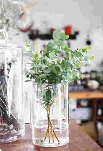 こちらのブロガーさんは、ユーカリの枝を飾っています。すっぽり収まるシンプルな透明な瓶がぴったりですね。ユーカリの清涼感のある香りも涼しさを与えてくれるのだそう♪