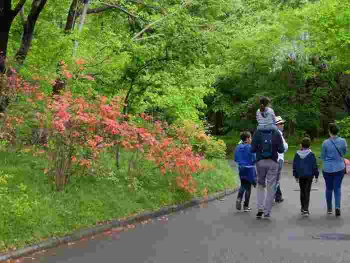 """けれども「皇居東御苑」においては、「皇居参観」や「雅楽演奏会」のような""""事前手続きが不要""""であり、「一般参賀」や「乾通り通り抜け」のように公開日時が厳格に定められているわけではなく、基本的には、一年を通じて、誰もが""""無料""""で入園することが出来ます。  【一般参観開催時や桜の季節を除き、「皇居東御苑」内が人で溢れ、混雑することは滅多にない。(4月中旬頃の『ヤマツツジ』や『山藤』が新緑に映える園内散策路)】"""