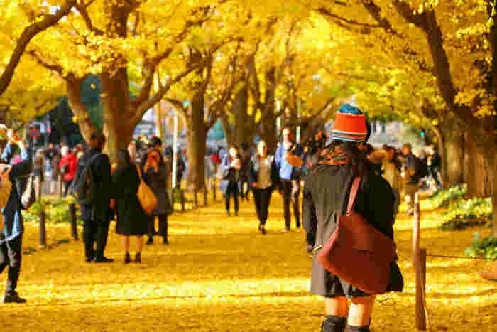 秋に楽しみたい風景の一つ、一面に染まった黄色が美しい「いちょう並木」。葉っぱが少し散り始めると、地面には黄色い絨毯が敷き詰められ、「サクッサクッ」と踏んで歩く感じがとっても情緒的です。