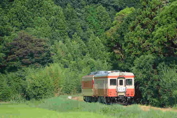 いすみ鉄道は、千葉県房総半島のいすみ市・大多喜町を走る路線です。大原駅から上総中野駅までは全14駅、全長26.8キロ、所要時間は約50分ほどです。 一時は赤字が続き存続が危ぶまれていましたが、公募で採用された社長(鳥塚亮氏)のアイデアで話題を呼び、経営危機を乗り越えました。