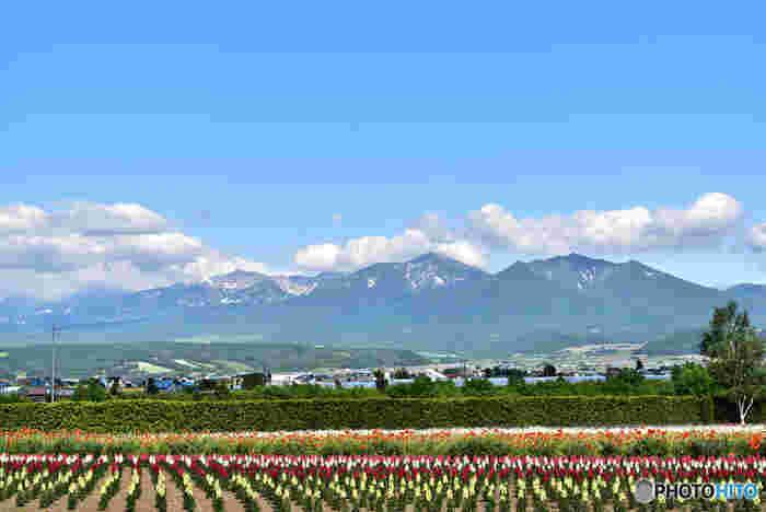 北海道中央部に位置する富良野とは、北は美瑛町に隣接する丘陵地帯から、南は空知川流域の富良野盆地までの地域一帯の通称です。今回は、富良野の中における「富良野市」「上富良野町」「中富良野町」の絶景ポイントをご紹介します。
