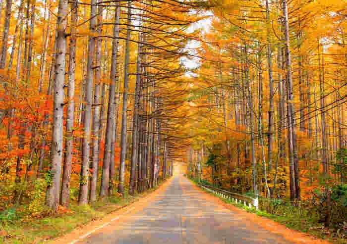 秋といえば、この景色。