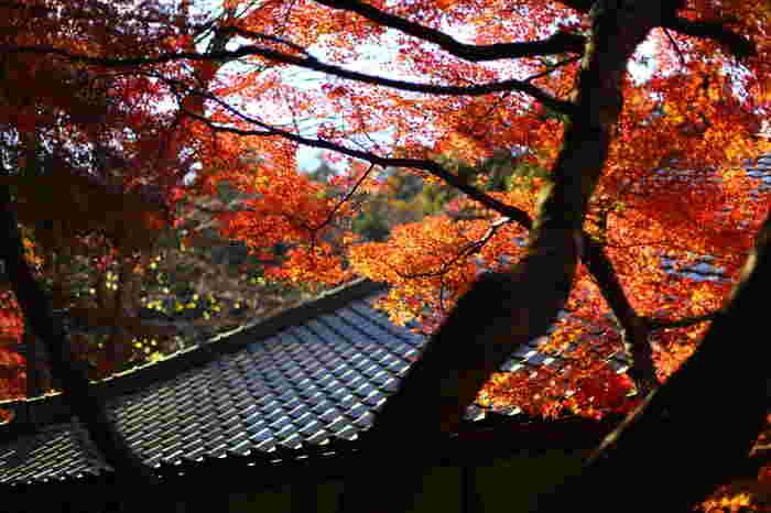 「悟りの窓」にはいつも行列ができるので、はやめの時間帯(できれば平日)がおすすめです。もちろん、境内には他にも美しい紅葉を眺めることができますよ。