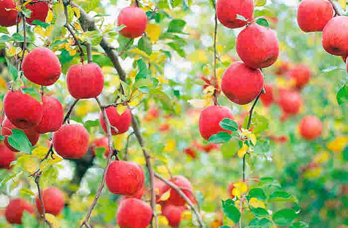 「SUN&LIV」が大事にしているのは、生産者さんが愛情をかけ育み、太陽の恵みをいっぱいに受けた果物を、ジュースやジェラートなどの製品にして、それを、手にしてくれる全ての人達に最後まで責任を持って届けること。 生産者の心、そして、何よりも、お客様ひとりひとりの笑顔をいつも思い浮かべながら、果物の味と品質にこだわり、安全であることを第一に、美味しく、誰もが安心して飲める製品づくりを行っています。