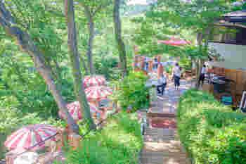 """「まるで天空から眺めるよう」と絶賛されるのはこちらの""""樹ガーデン""""。長い階段を登っていくと...パラソルがいくつも咲いた華やかなカフェが現れます。森の中の高台にせり出したテラスからは鳥の声、走るりすの気配、輝きが溢れるような緑の木々が一望できます。"""