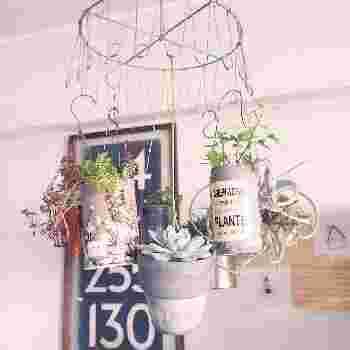 ドライフラワー用のハンガーに鉢をランダムに吊るしています。  くるくると回って、見える風景が変わるもの楽しいものですね。