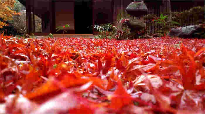 """庵の名は、「欣求浄土・厭離穢土」に由来します。 """"厭離穢土(えんりえど)""""・""""欣求浄土(ごんぐじょうど)""""は、対句として用いられる仏教用語。  穢れた現実の世界を離れて、仏の世界を心から願い求めるという意味があります。紅葉一色に染まる頃の「厭離庵」は、正に浄土の世界かも知れません。"""