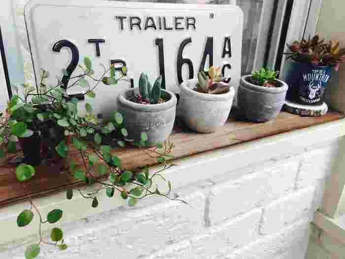 ここからは、インテリアのヒントにしたくなる素敵な「観葉植物の飾り方」をご紹介します♪こちらは多肉植物やワイヤープランツなど、小さくて可愛い植物を組み合わせたおしゃれなディスプレイです。シックなカラーの鉢やナンバープレートなど、男前のインテリアもかっこいいですね。