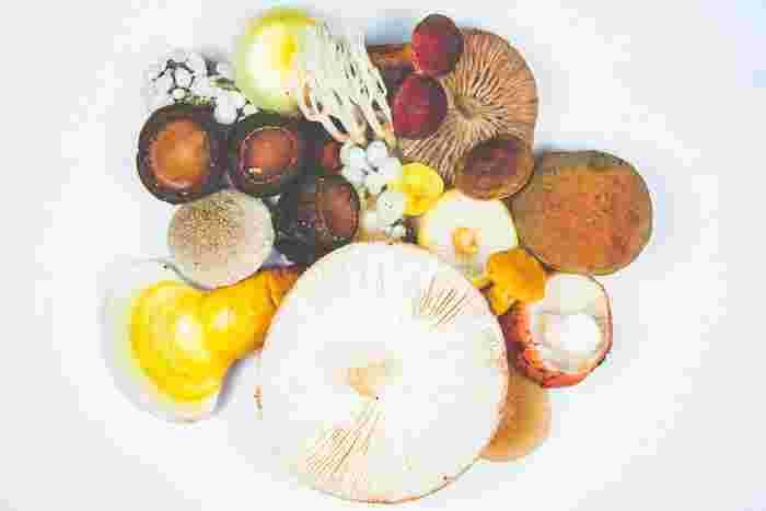スーパーで一年中見かけるキノコ。料理にぐっと旨みが加わる食材で、ローカロリーなもの嬉しいところ。数種類を一緒に使うと、より風味が増して美味しくなるメニューも多いんですよ。  【賞味期限】 シメジ:5日~7日ほど シイタケ:1週間ほど エリンギ:5日~7日ほど エノキ:2~3日ほど マッシュルーム:1週間ほど  【オススメの保存方法】 キノコは水分を嫌うので、絶対に洗わずに保存するのがポイント。特にシイタケは水分が苦手なので注意です。買ってきたら容器から出し、新聞紙やキッチンペーパーにくるんでからビニール袋に入れて冷蔵庫へ。マッシュルームだけは乾燥を避けるために、紙でくるんだ後、密封できるタッパーやジッパーつきのビニール袋を使いましょう。
