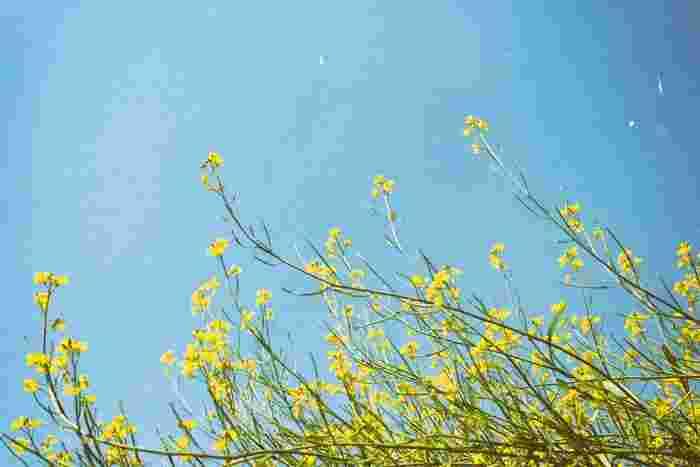 さわやかな緑とやさしい香りのお花があふれる春の街並み。駅やスーパーまでのいつもの道のりもちょっと足取りが軽くなって自然とポジティブにな気持ちになりますよね♪新しい生活が少し落ち着いたら、なにか「新しいこと」をはじめたくなるひとも多いのではないでしょうか。